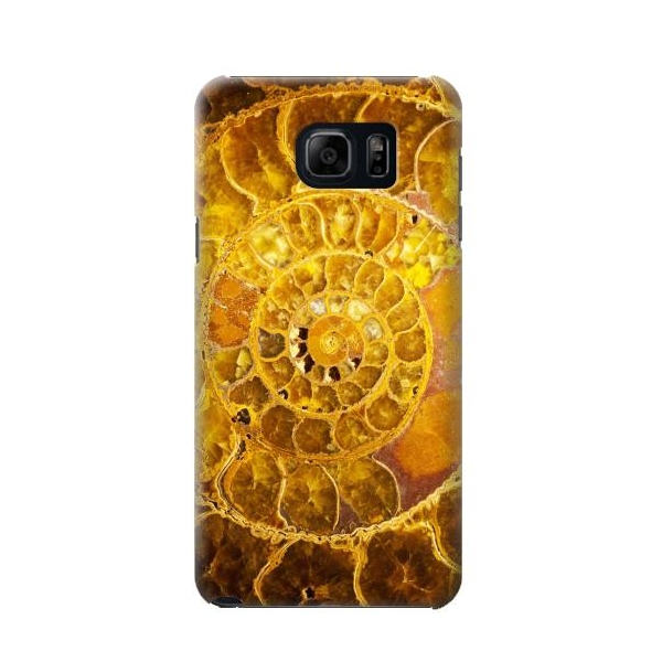 Ammonite Fossils Case