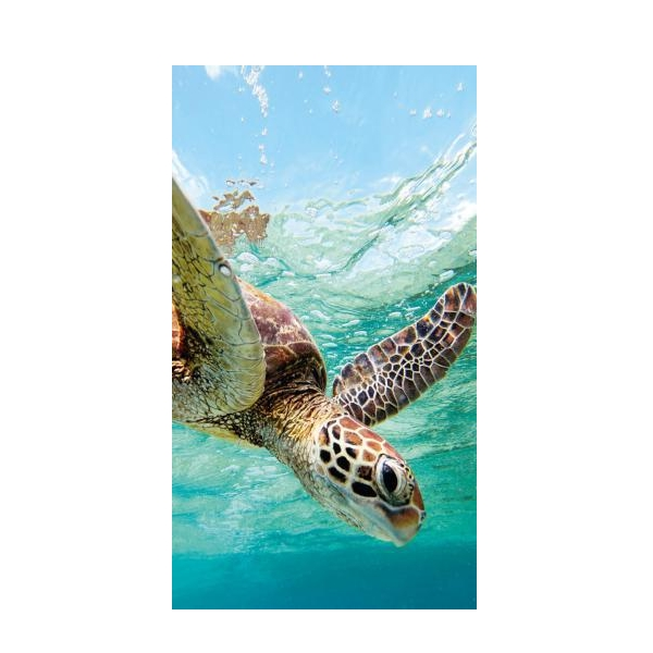 Ocean Sea Turtle Case